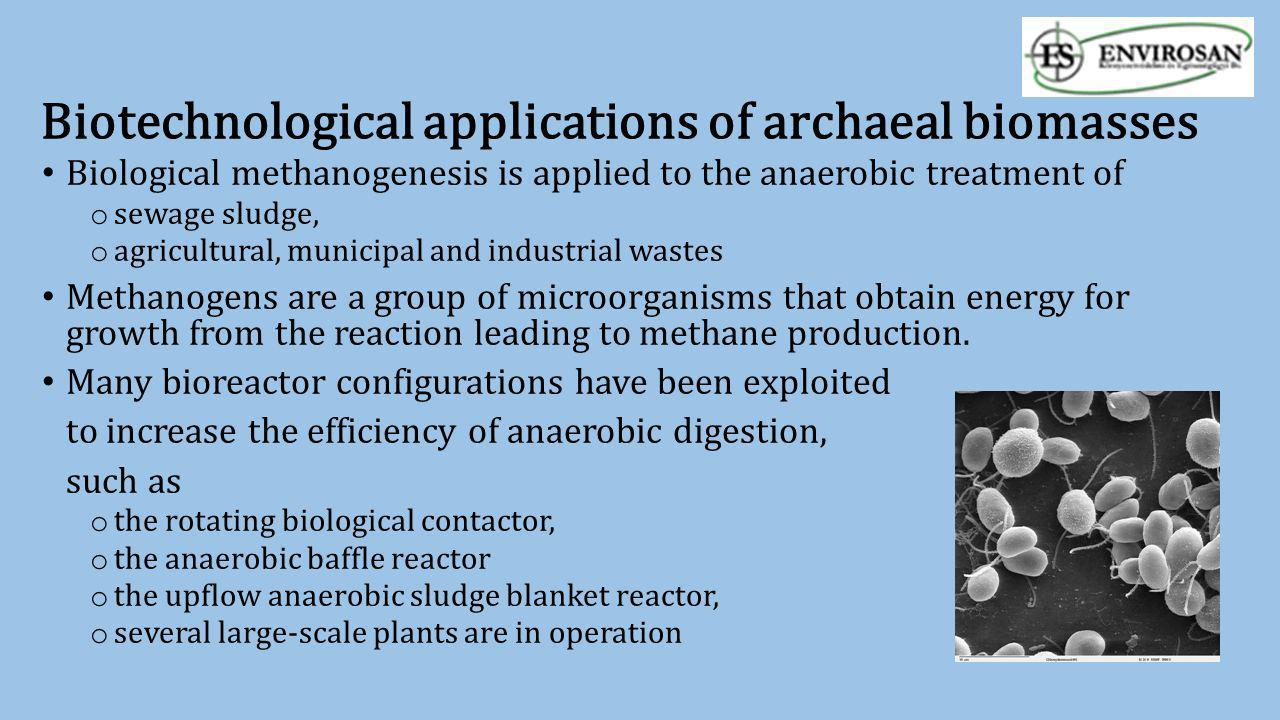 Biotechnological applications of archaeal biomasses