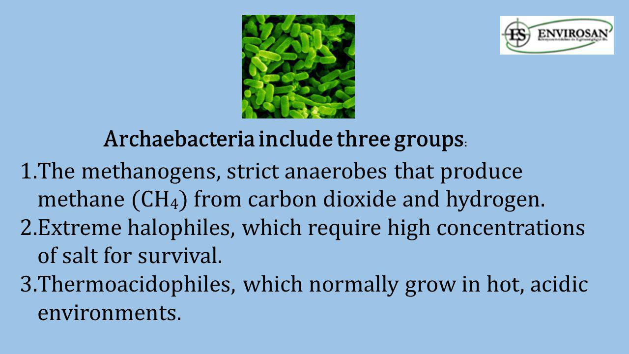 Archaebacteria include three groups: