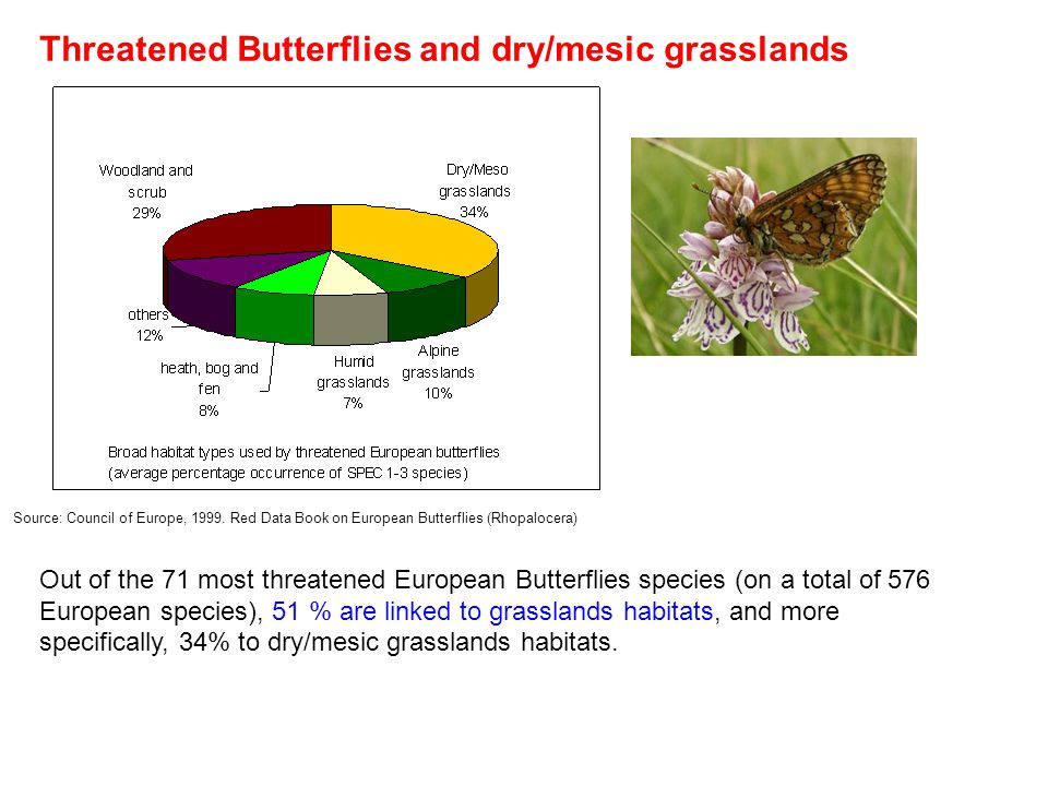 Threatened Butterflies and dry/mesic grasslands