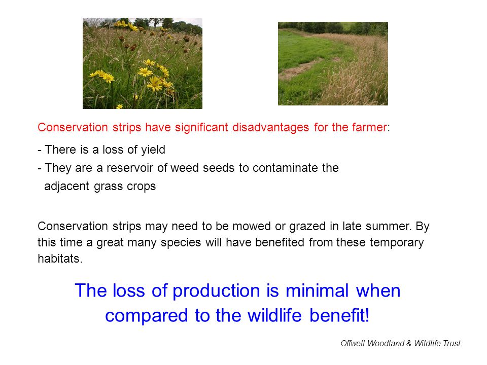Conservation strips have significant disadvantages for the farmer: