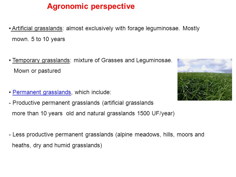 Agronomic perspective