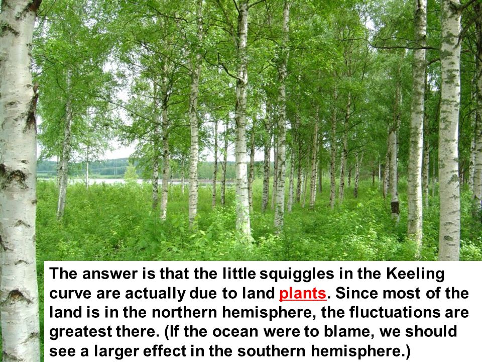 The answer is that the little squiggles in the Keeling curve are actually due to land plants.