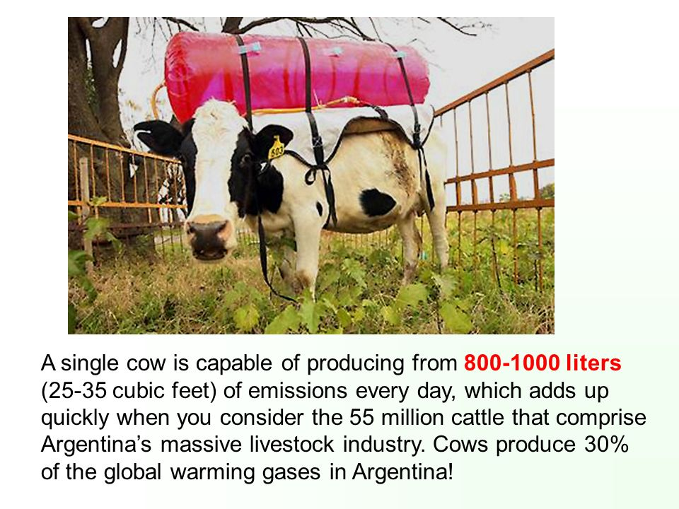 A single cow is capable of producing from 800-1000 liters (25-35 cubic feet) of emissions every day, which adds up quickly when you consider the 55 million cattle that comprise Argentina's massive livestock industry.
