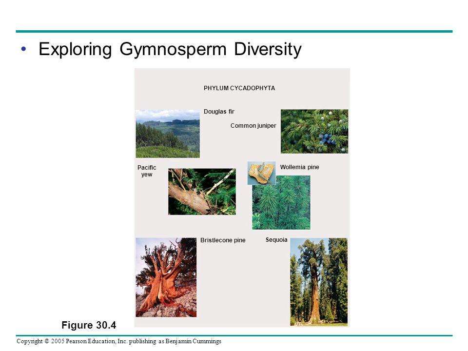 Exploring Gymnosperm Diversity