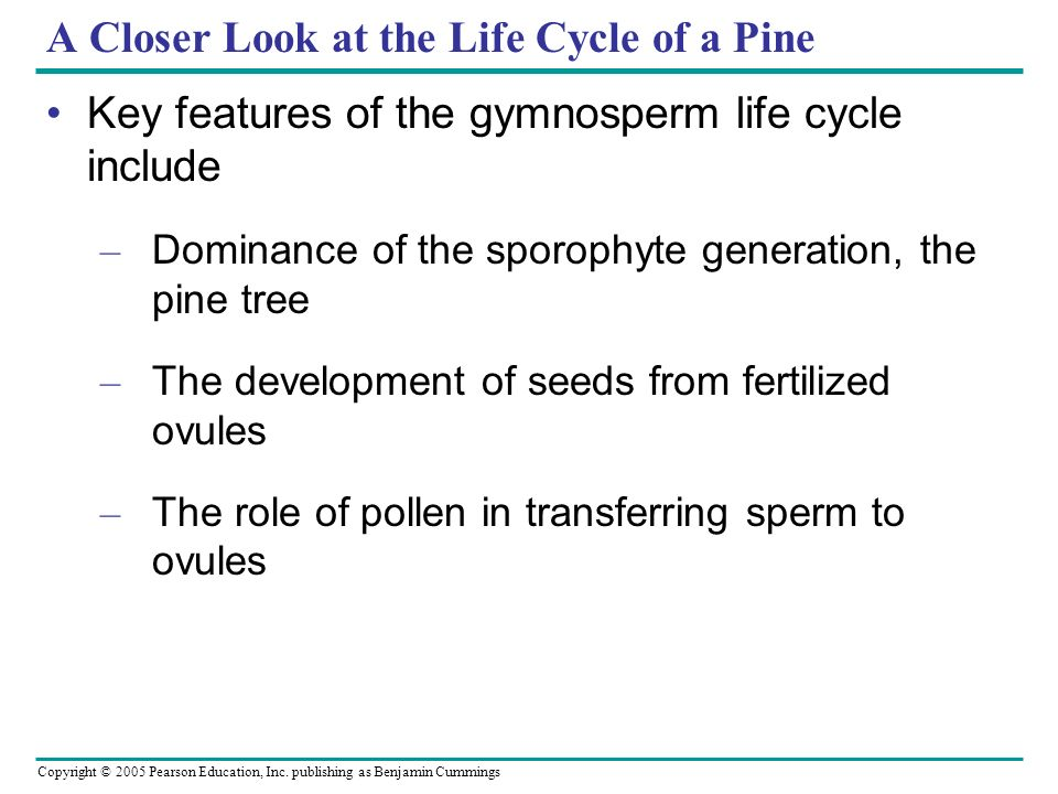 A Closer Look at the Life Cycle of a Pine