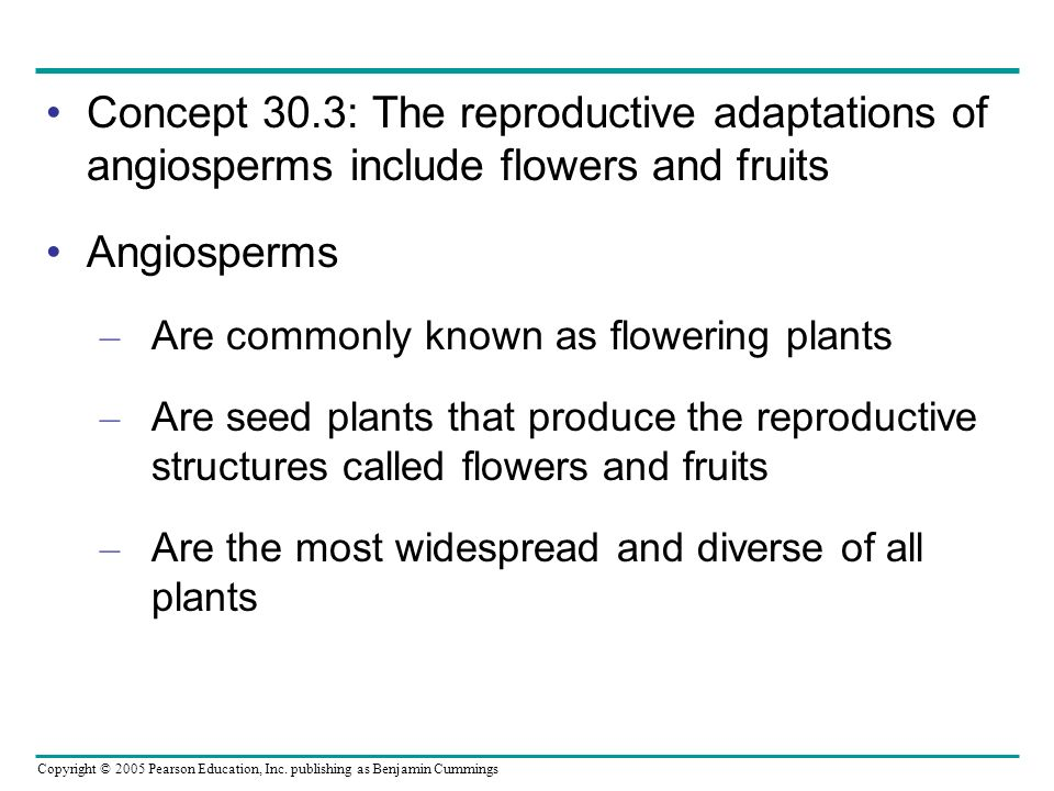 Concept 30.3: The reproductive adaptations of angiosperms include flowers and fruits