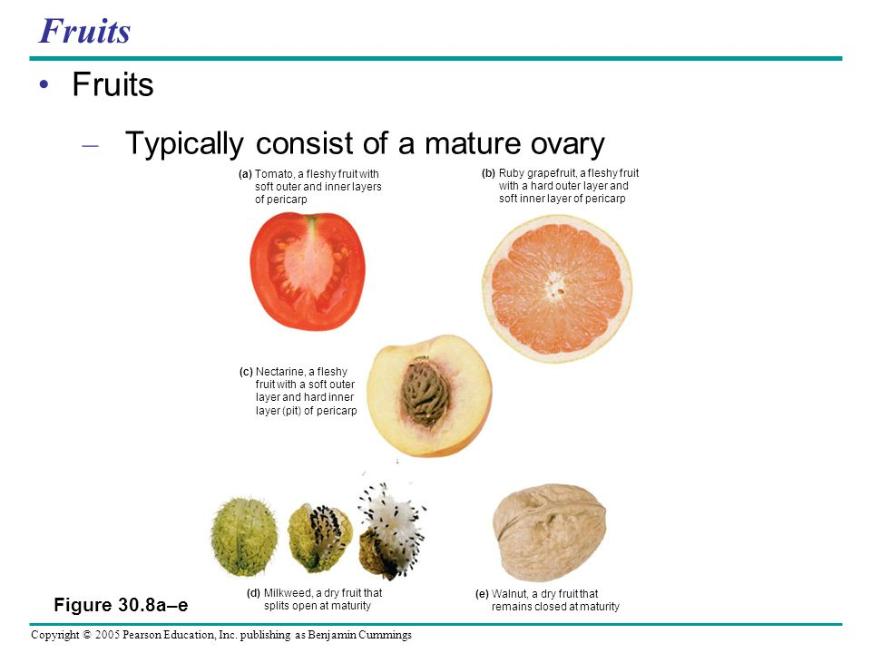 Fruits Fruits Typically consist of a mature ovary Figure 30.8a–e