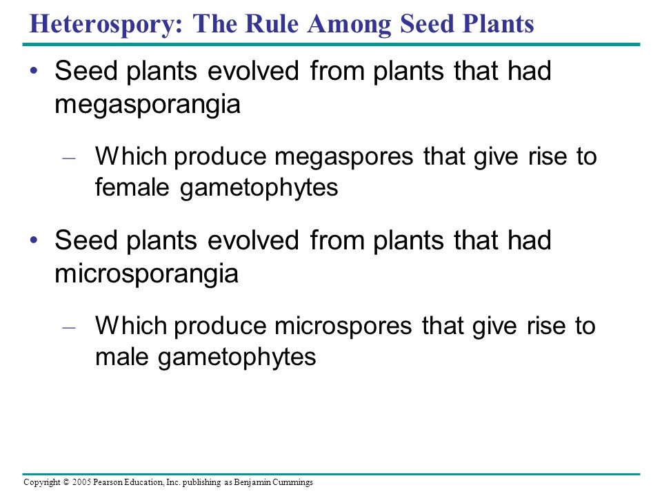 Heterospory: The Rule Among Seed Plants