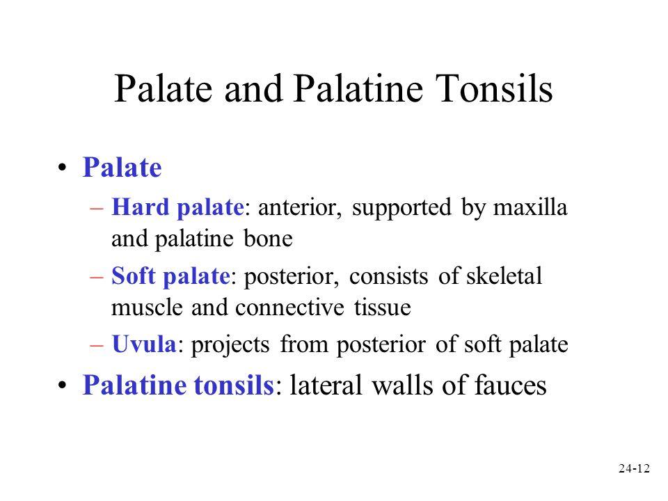 Palate and Palatine Tonsils