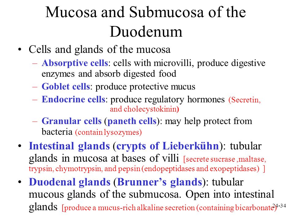 Mucosa and Submucosa of the Duodenum