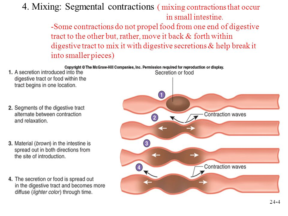 4. Mixing: Segmental contractions ( mixing contractions that occur