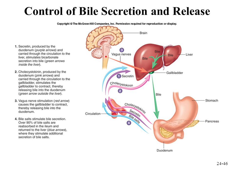 Control of Bile Secretion and Release