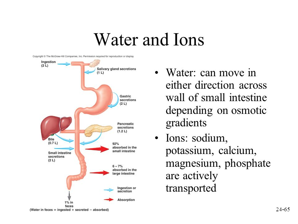 Water and Ions Water: can move in either direction across wall of small intestine depending on osmotic gradients.