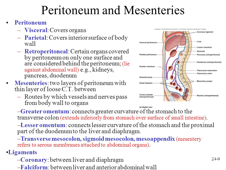 Peritoneum and Mesenteries