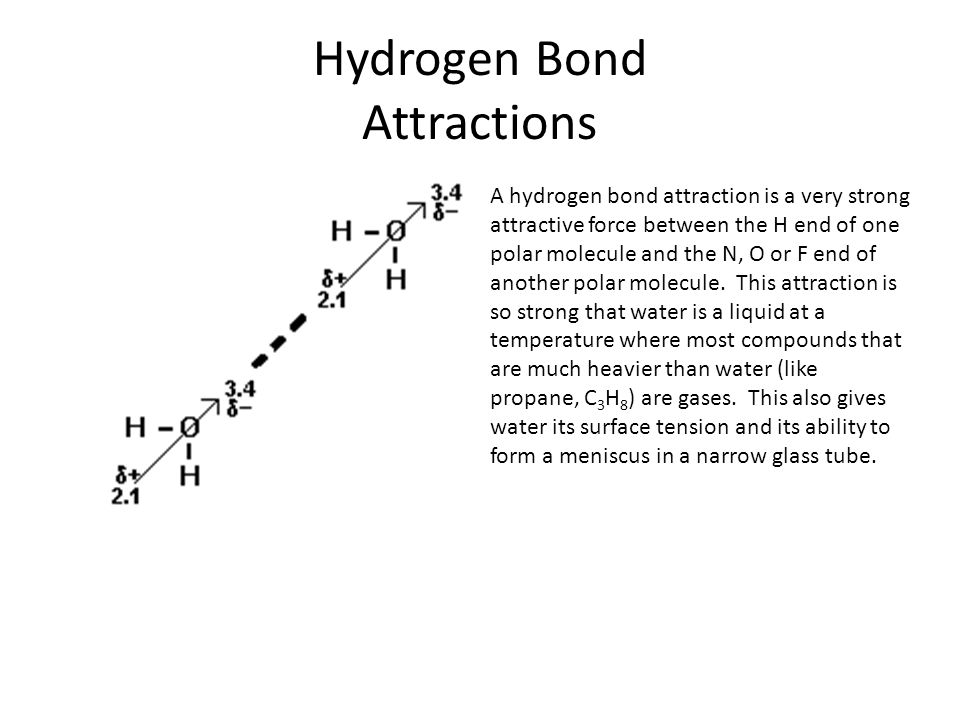Hydrogen Bond Attractions