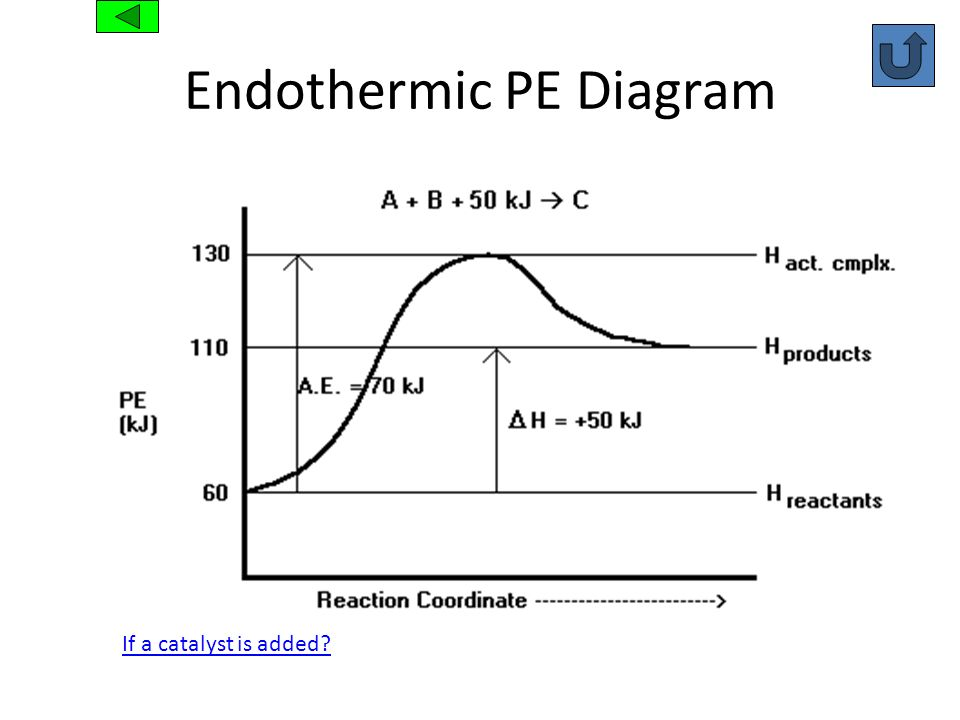 Endothermic PE Diagram