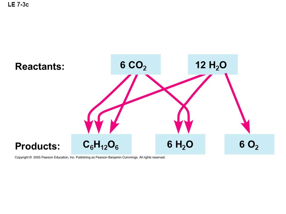 LE 7-3c Reactants: 6 CO2 12 H2O C6H12O6 6 H2O 6 O2 Products: