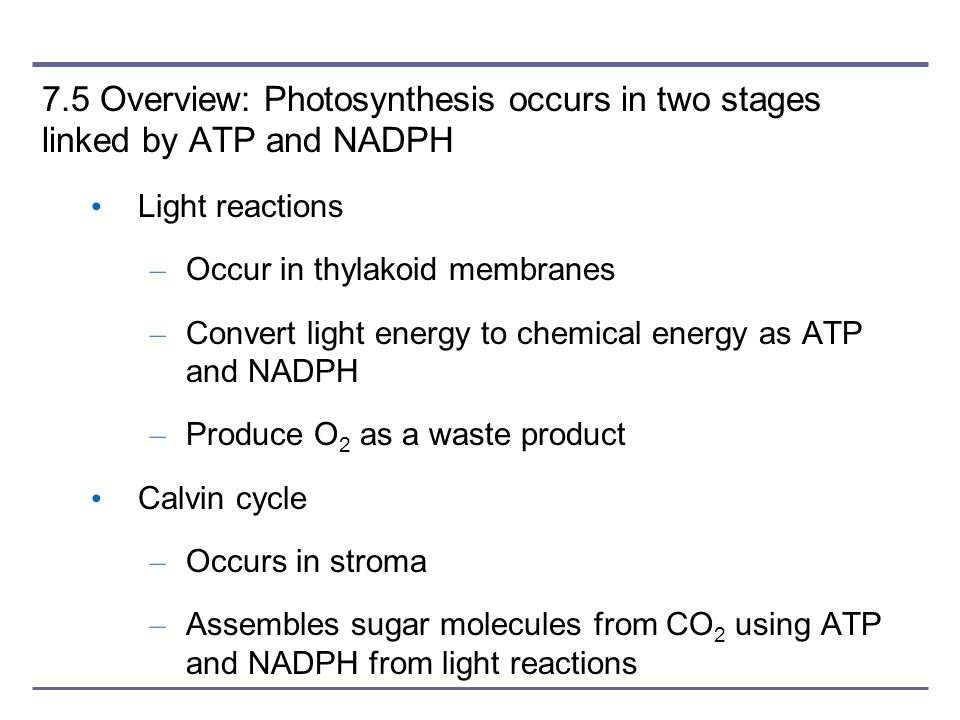 7.5 Overview: Photosynthesis occurs in two stages linked by ATP and NADPH