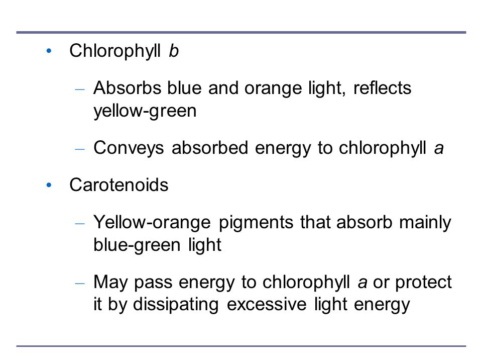 Chlorophyll b Absorbs blue and orange light, reflects yellow-green. Conveys absorbed energy to chlorophyll a.