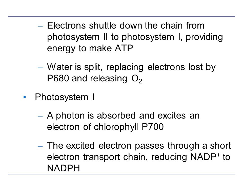 Electrons shuttle down the chain from photosystem II to photosystem I, providing energy to make ATP