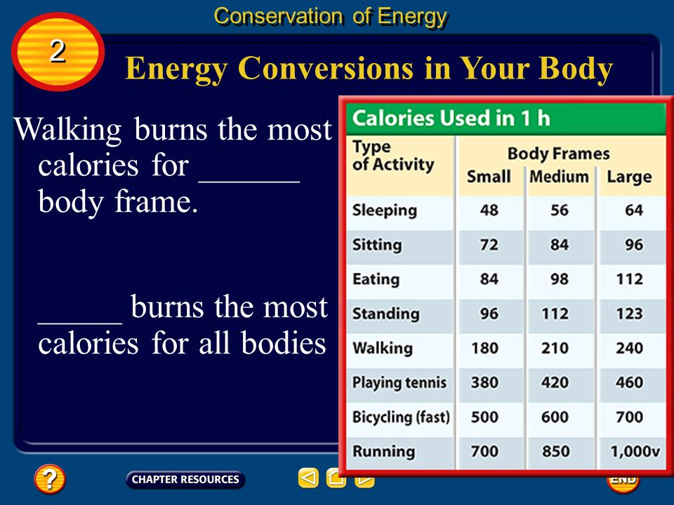 Energy Conversions in Your Body