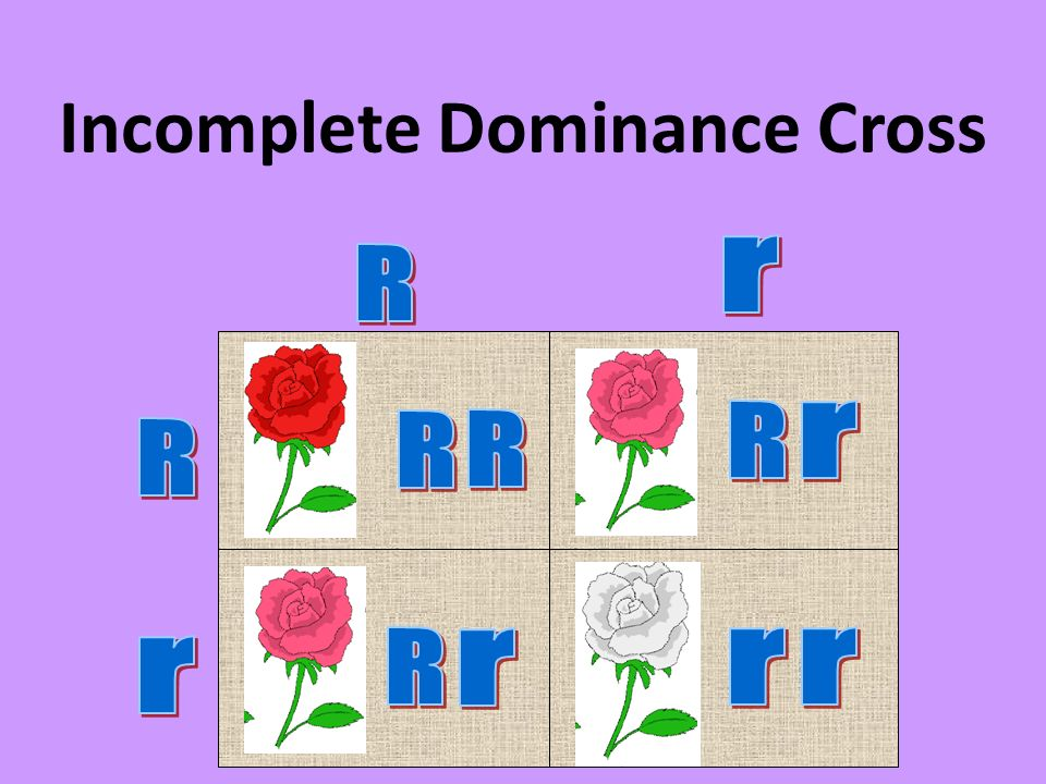 Incomplete Dominance Cross