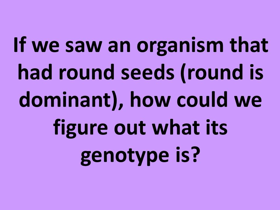 If we saw an organism that had round seeds (round is dominant), how could we figure out what its genotype is