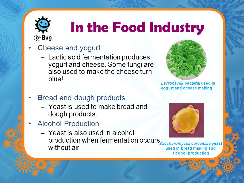 In the Food Industry Cheese and yogurt Bread and dough products