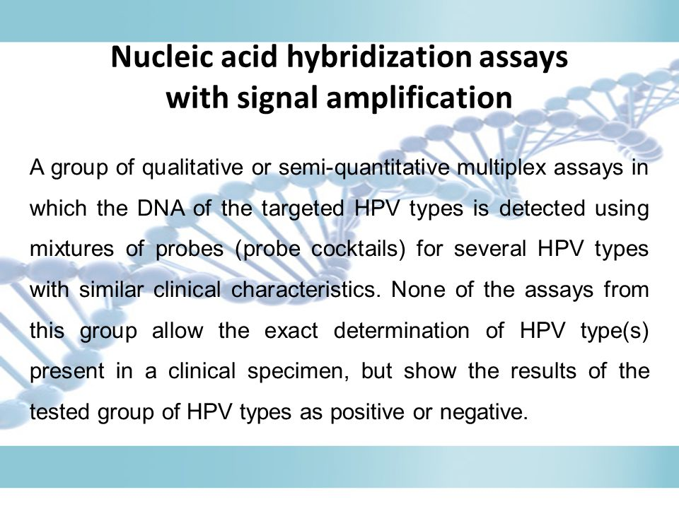 Nucleic acid hybridization assays with signal amplification