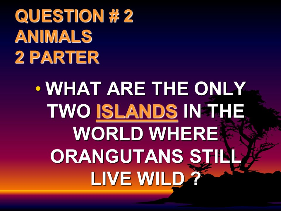 QUESTION # 2 ANIMALS 2 PARTER