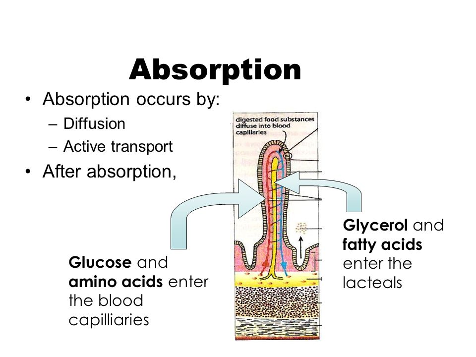 Absorption Absorption occurs by: After absorption, Diffusion