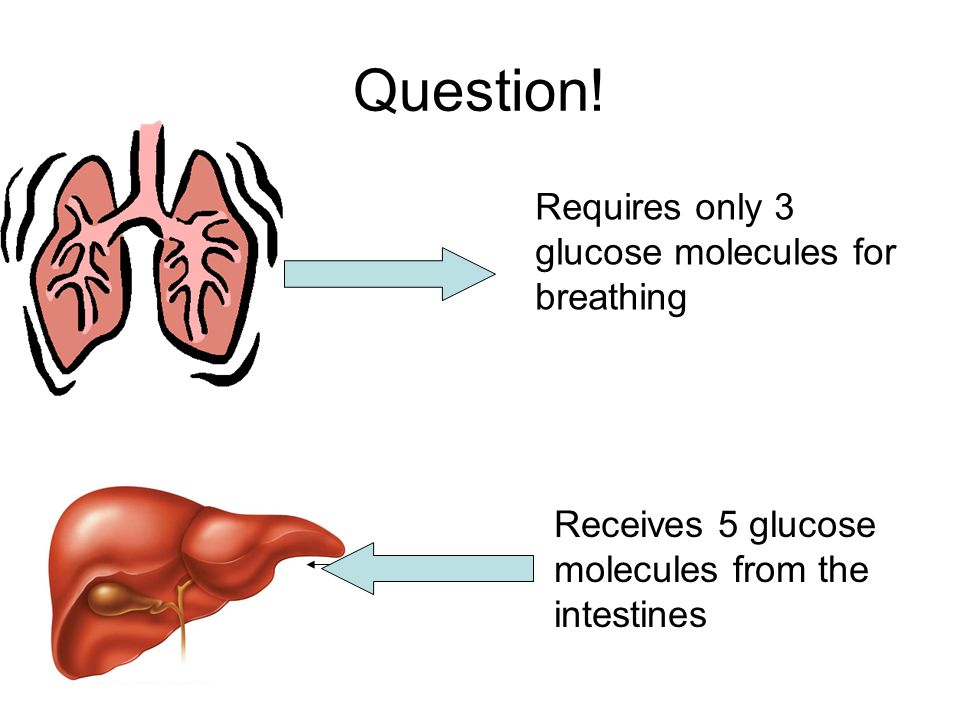 Question! Requires only 3 glucose molecules for breathing