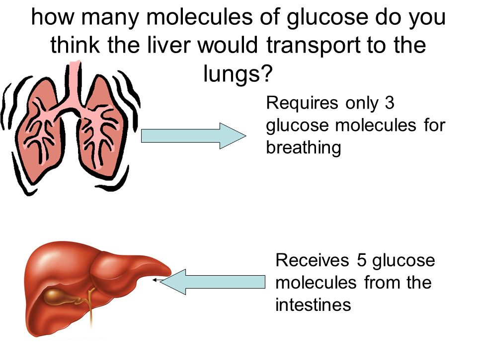 how many molecules of glucose do you think the liver would transport to the lungs