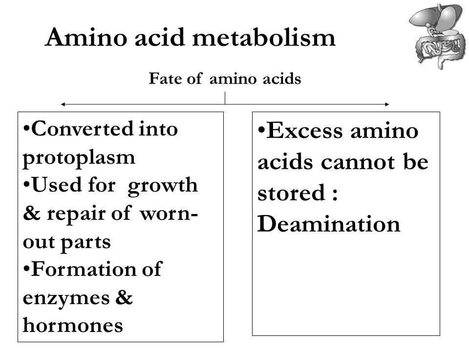 Amino acid metabolism Fate of amino acids. Converted into protoplasm. Used for growth & repair of worn-out parts.