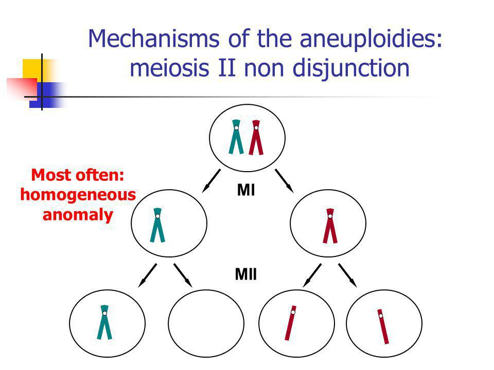 Mechanisms of the aneuploidies: meiosis II non disjunction