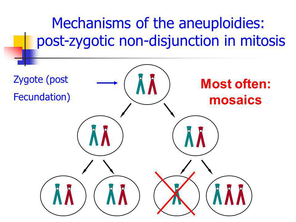 Mechanisms of the aneuploidies: post-zygotic non-disjunction in mitosis