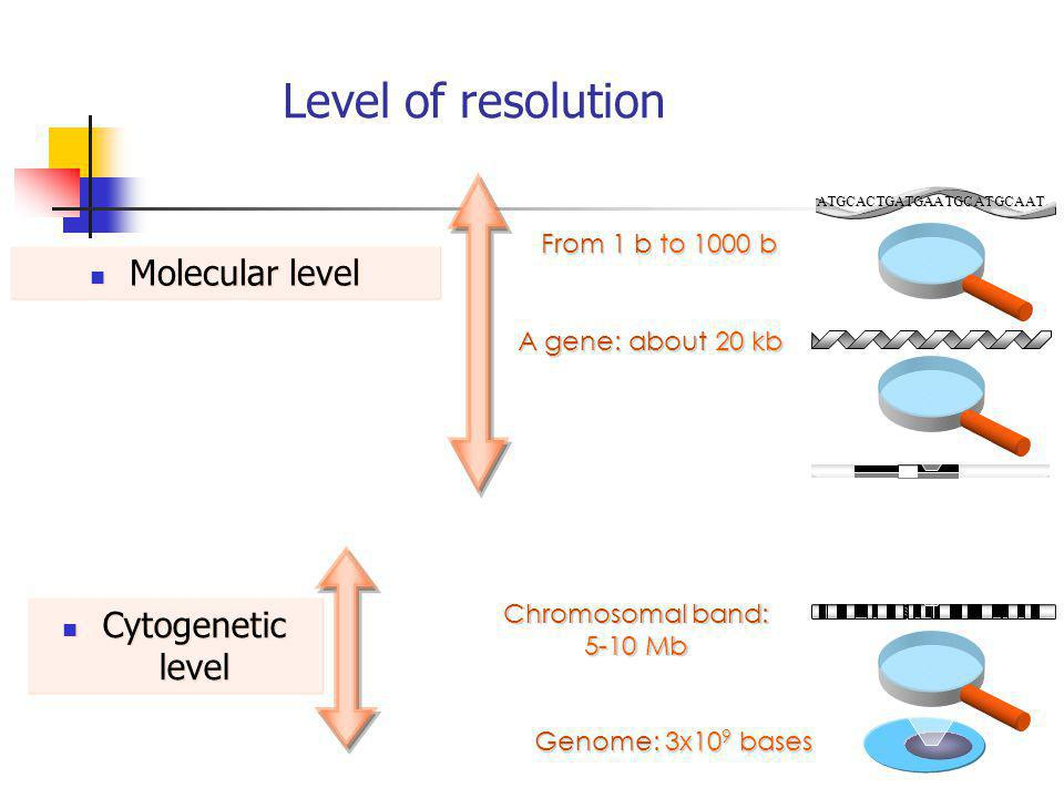 Level of resolution Molecular level Cytogenetic level