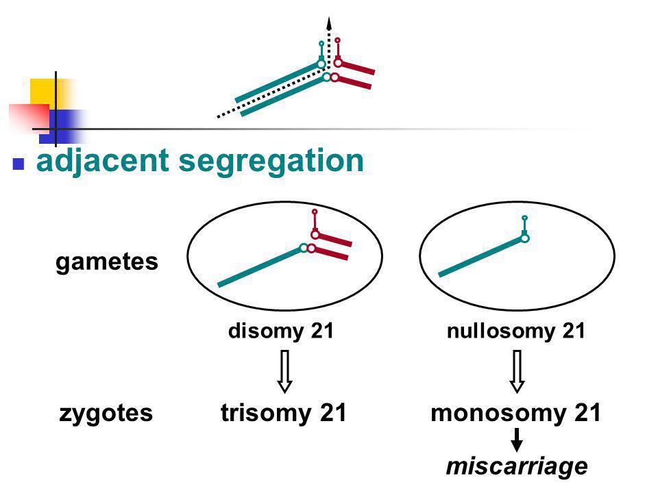 adjacent segregation trisomy 21 gametes zygotes monosomy 21