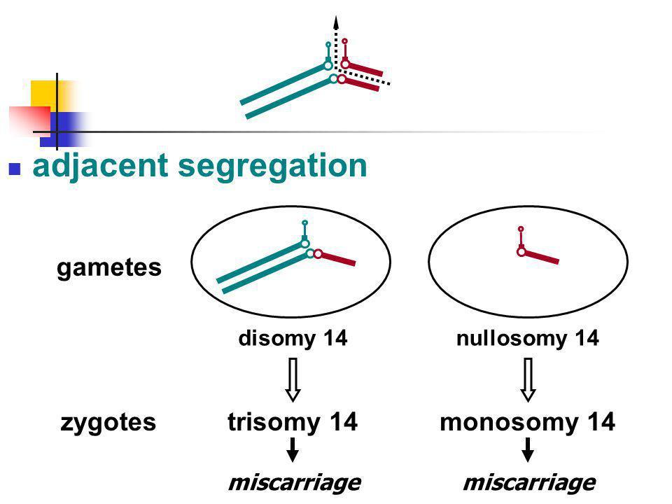 adjacent segregation trisomy 14 gametes zygotes monosomy 14 disomy 14