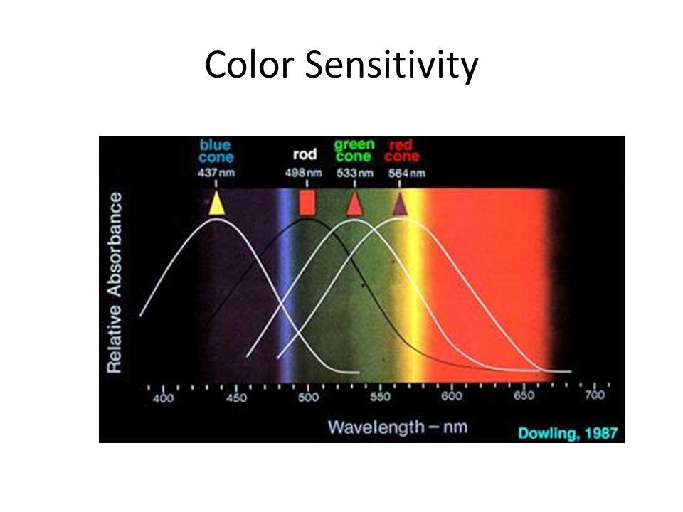 Color Sensitivity