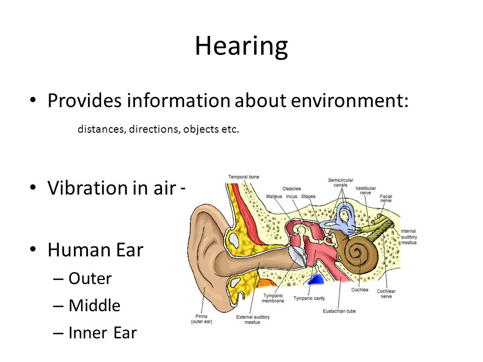 Hearing Provides information about environment: distances, directions, objects etc. Vibration in air – Sound Waves.
