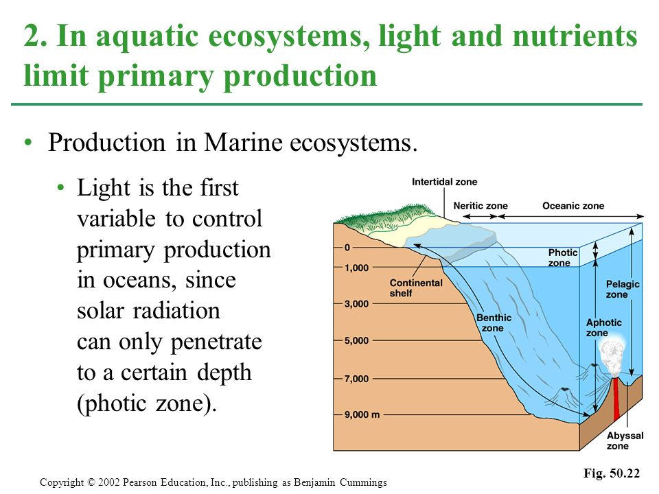 2. In aquatic ecosystems, light and nutrients limit primary production