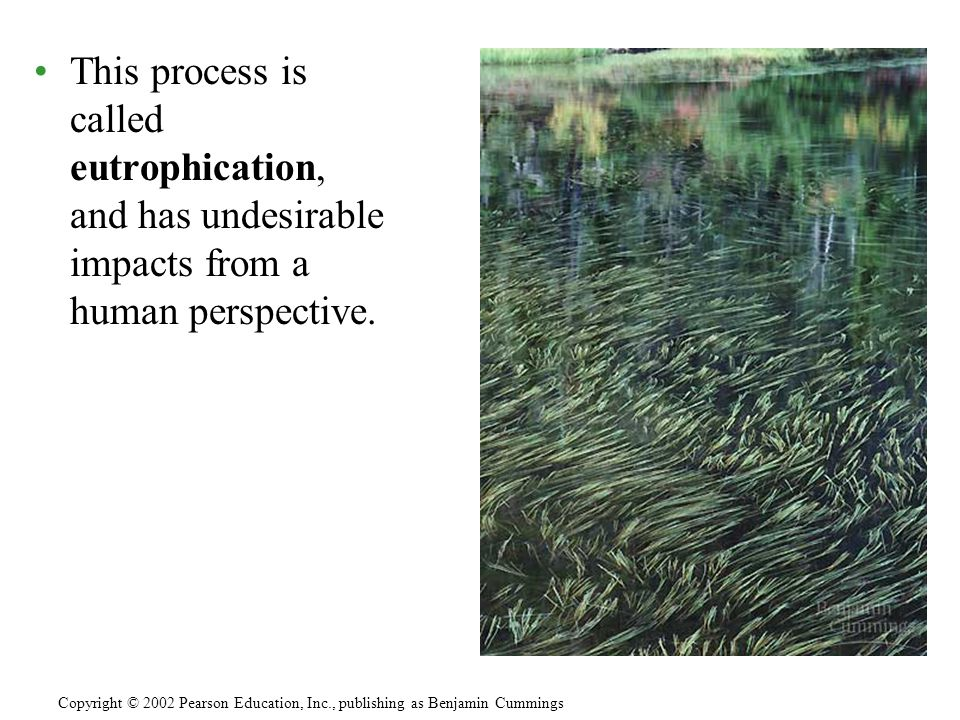 This process is called eutrophication, and has undesirable impacts from a human perspective.