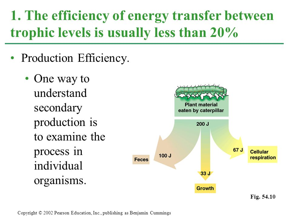1. The efficiency of energy transfer between trophic levels is usually less than 20%