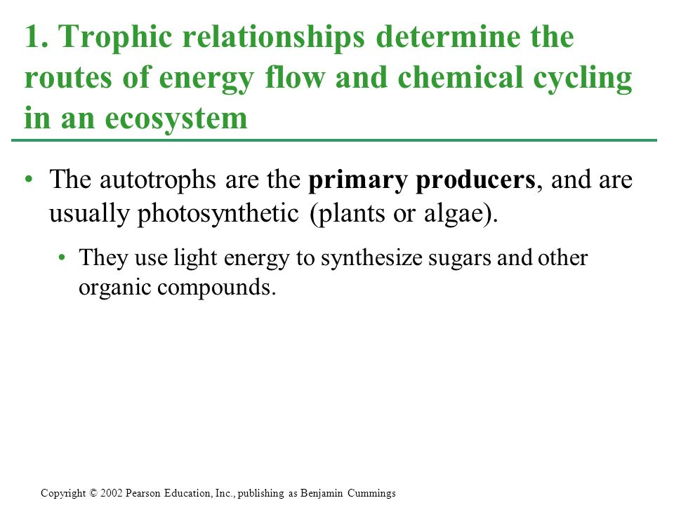 1. Trophic relationships determine the routes of energy flow and chemical cycling in an ecosystem