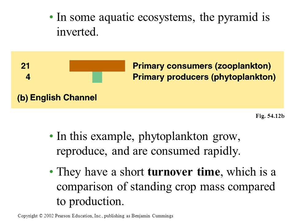 In some aquatic ecosystems, the pyramid is inverted.