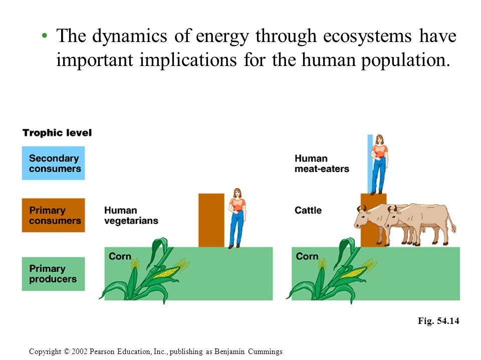 The dynamics of energy through ecosystems have important implications for the human population.