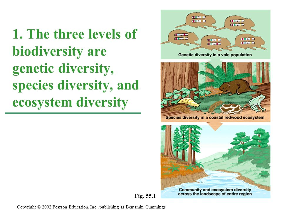 1. The three levels of biodiversity are genetic diversity, species diversity, and ecosystem diversity