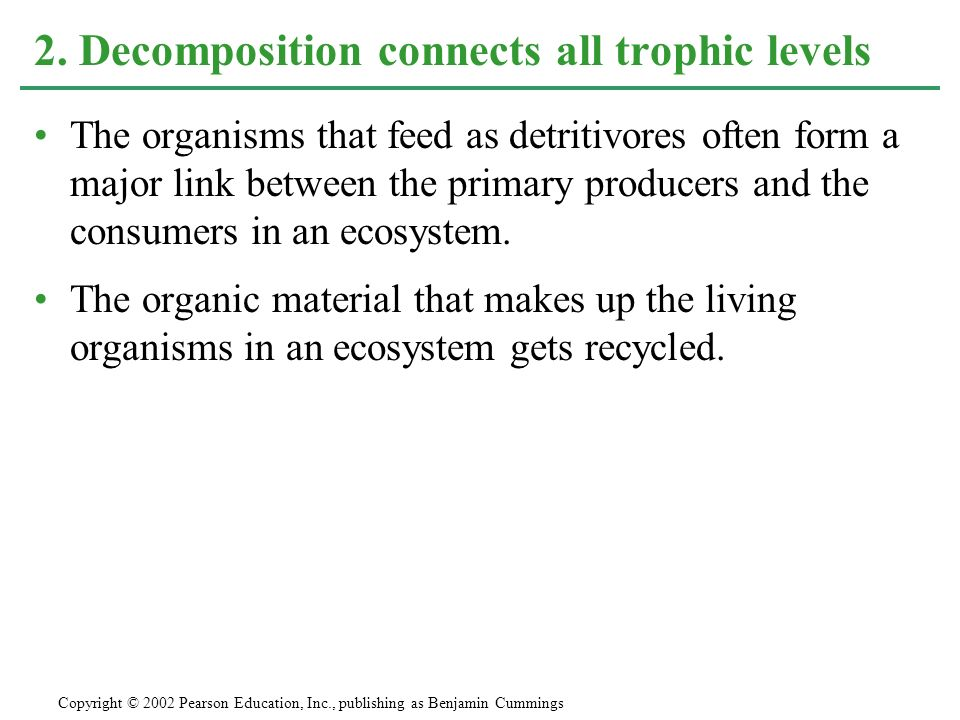 2. Decomposition connects all trophic levels