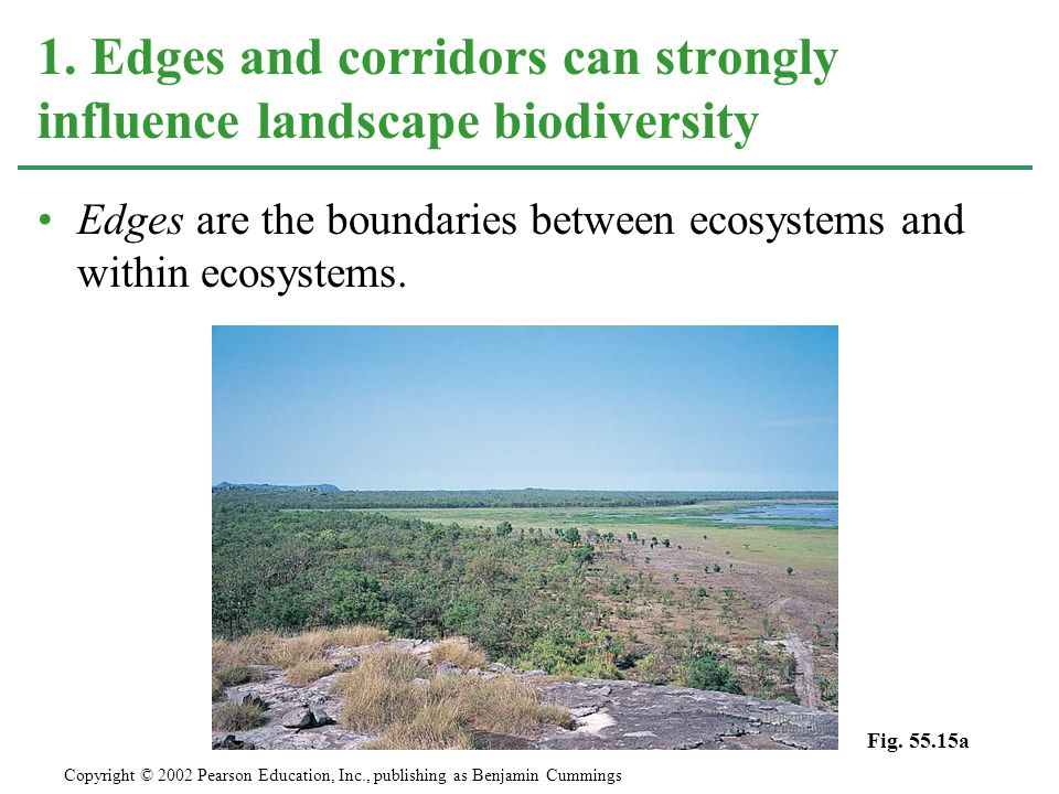 1. Edges and corridors can strongly influence landscape biodiversity
